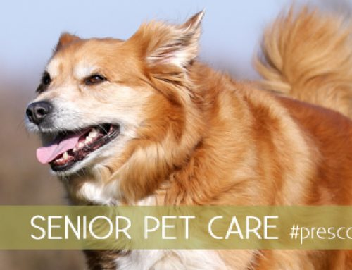 Caring For Your Senior Pets