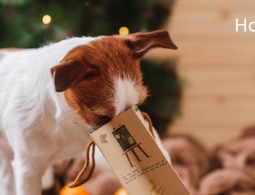 Holiday Safety – Keep Your Pet Safe This Season