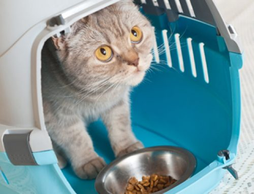 Are cats low maintenance pets?